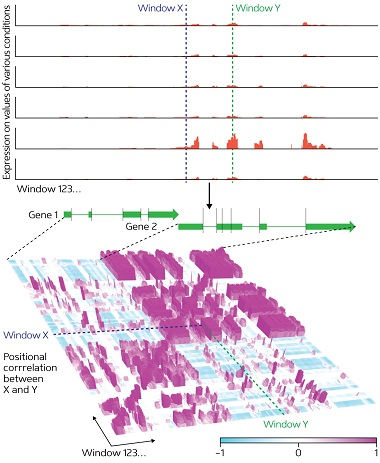 Figure 1: From next generation sequencer expression data for two genes (green), expressed in different plant tissues and conditions, the ARTADE2 computational algorithm produces more accurate representations of RNA molecule reconstructions (bottom) than the pre-processed transcriptional expression level indications shown in red (top). Unclear representations of the genes (top left), for example, are visible after applying ARTADE2 (bottom left).