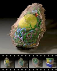 A powerful 3-D animation tool created by Graham Johnson oftthe Scripps Research Institute, Andrew Noske of the National Center for Microscopy & Imaging Research, and Bradley Marsh of the University of Queensland was selected as the winning video in the ninth annual International Science & Engineering Visualization Challenge. Original 3-D maps of pancreatic