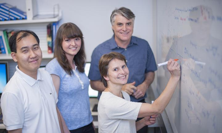 Dr Andrey Kan, Ms Julia Marchingo, Dr Susanne Heinzel and Professor Phil Hodgkin have combined mathematics and laboratory studies to define how the size of the immune response is controlled.
